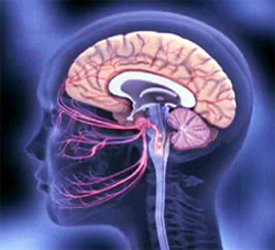 Абсцесс головного мозга фото